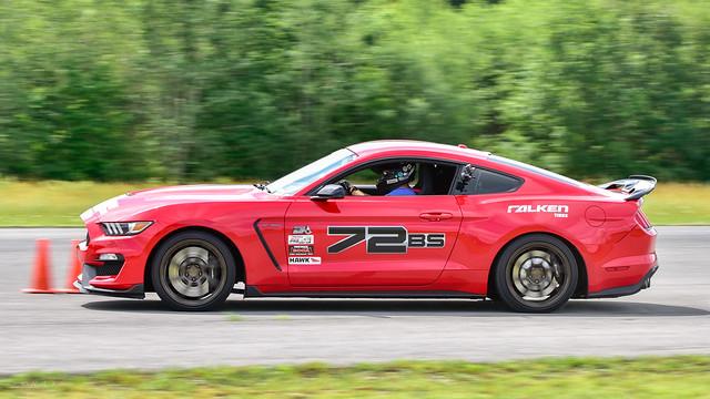 Panning Mustang