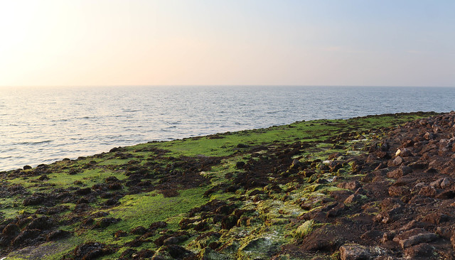 Little Green Coast