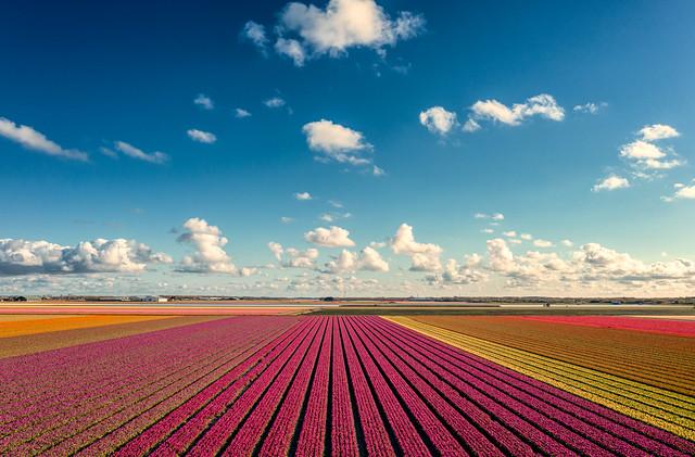 Fully operational Dutch cloud distribution center. Callantsoog, Holland.