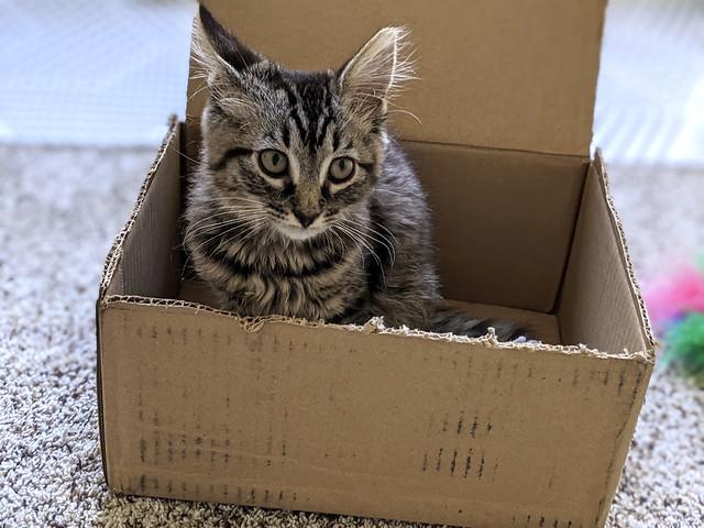 First Box, sort of a starter box...