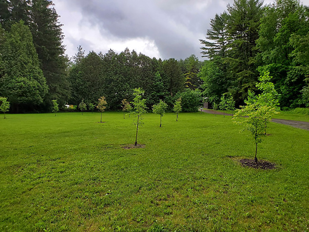 Newly planted trees Onondaga County Soil & Water Conservation District