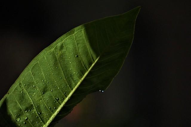 Drops, ...........