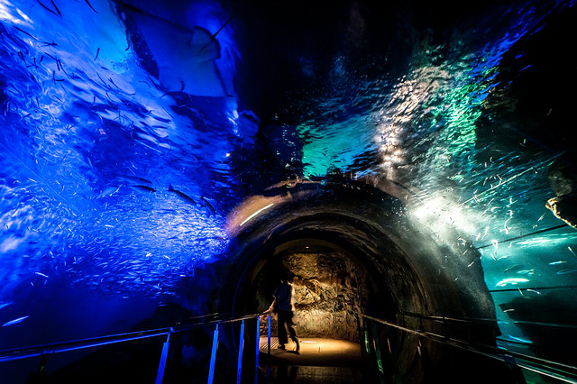 海響館-夜の水族館 2021 #2ーKaikyokan-An aquarium at night 2021 #2
