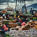 Jagalchi Market Busan…Fresh squid export