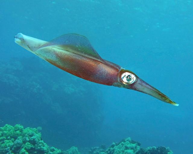 squidprofile