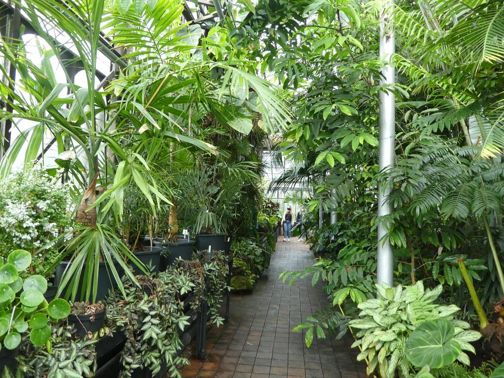 Tropical plants in the Glasgow Botanic Gardens