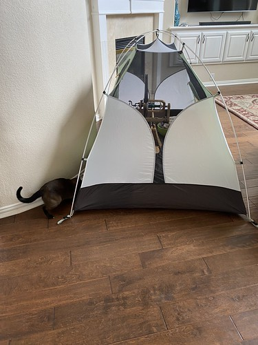 Noodle and the tent