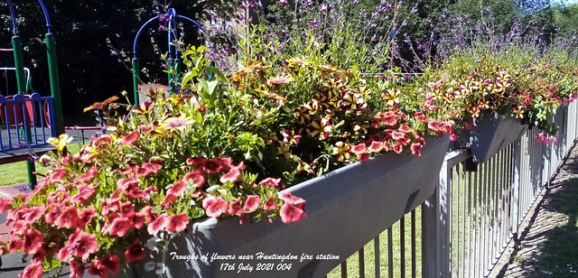 Troughs of flowers near Huntingdon fire station 17th July 2021 004