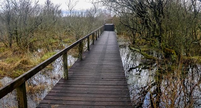 scragh bog - westmeath