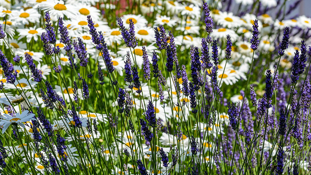 Cheerful array of flowers