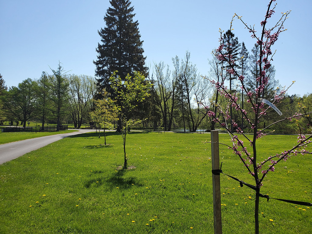 Colorful flowers and leaves adorn newly planted trees Onondaga County Soil & Water Conservation District