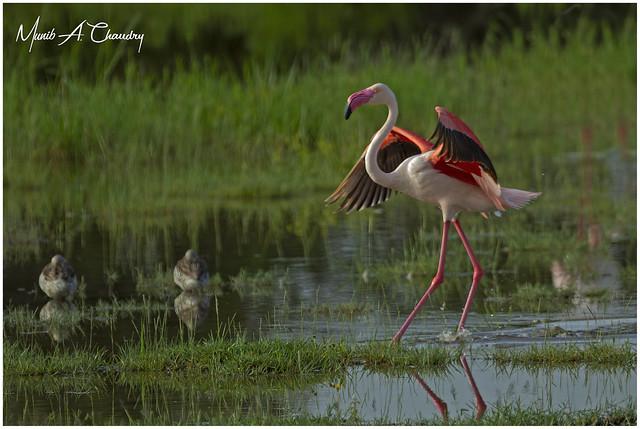 Dancing in the Swamp!