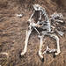 Deer bones on thatch