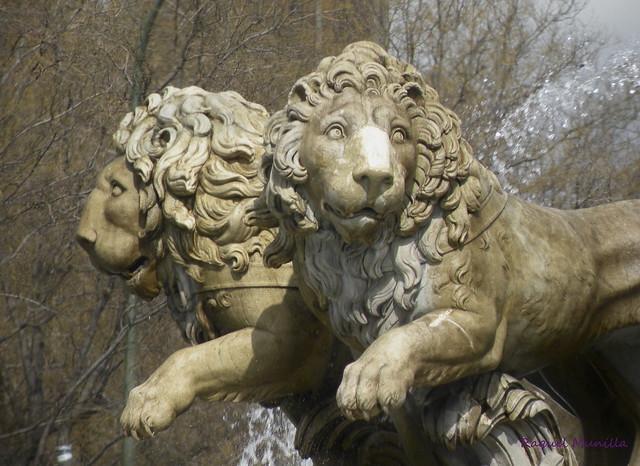 Unos leones en Madrid marzo10 151