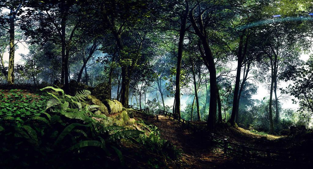 A walk in the woods....