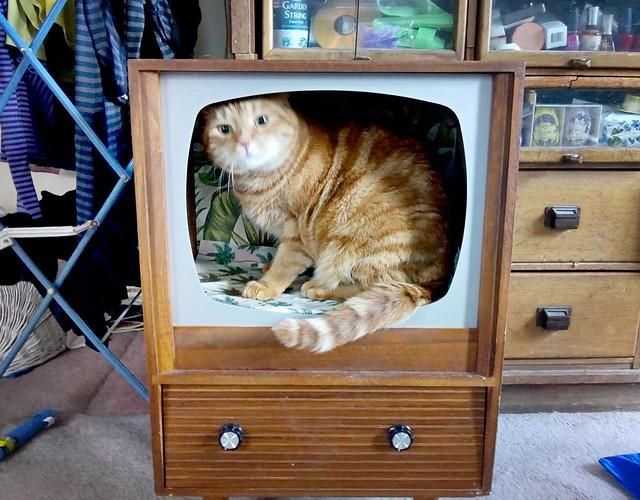 Woody on TV