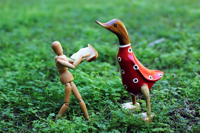 210/365 - Feeding The Ducks