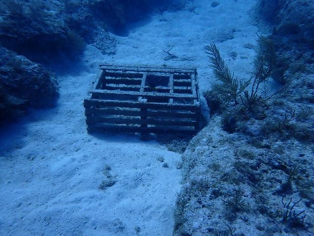 "PM 21 AUG 2021 ""Permitted"" Goal Clean Seas Florida Keys Clean Up Tour"