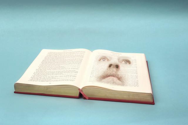 210/365 - i'm an open book