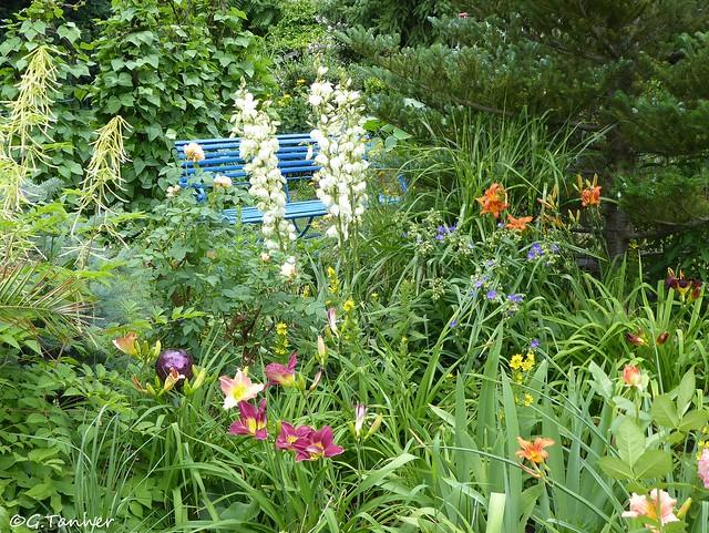 Taglilien im Garten 2021