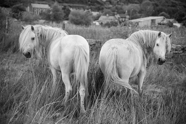 Tanygrisiau white horses