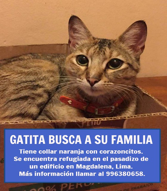 Gatita encontrada en Magdalena, Lima