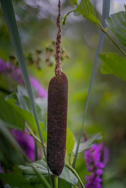 cigar in jungle, Waldsee, Fechenheim, Frankfurt