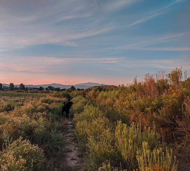 210/365 - Sunrise dog walks