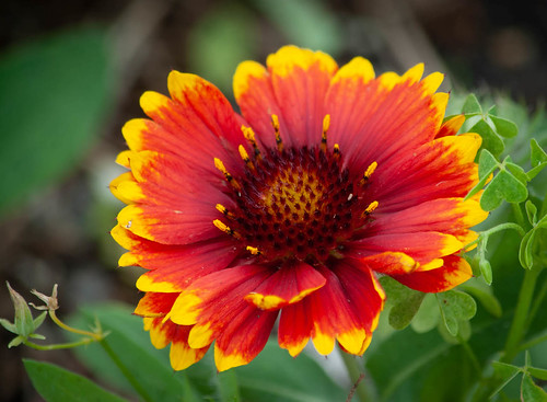 Bright Flourishes