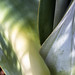 Succulent, Light & Shadows, 4.24.18