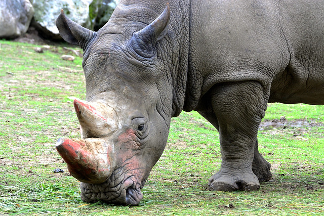 Rhino - Relaxed Mood