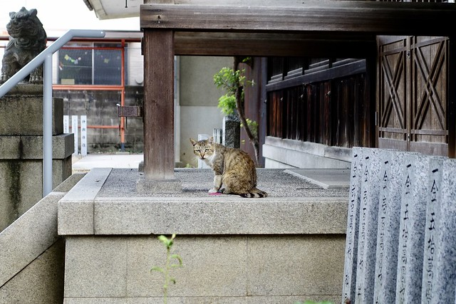 Today's Cat@2021−07−30