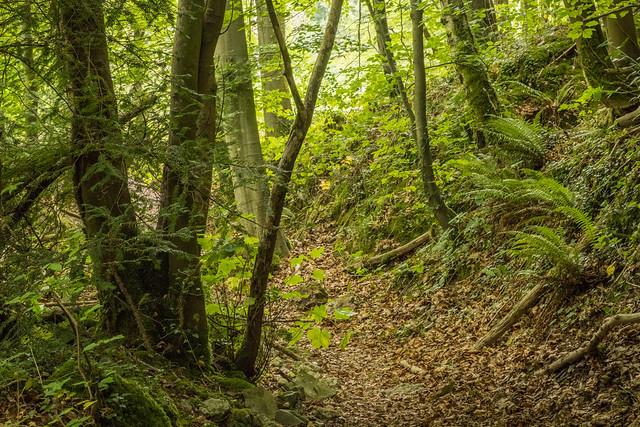 Woodland detail, Rhydymwyn area, N/Wales, UK.