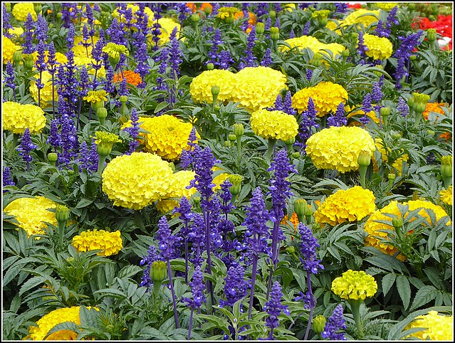 Summer Blooms ...