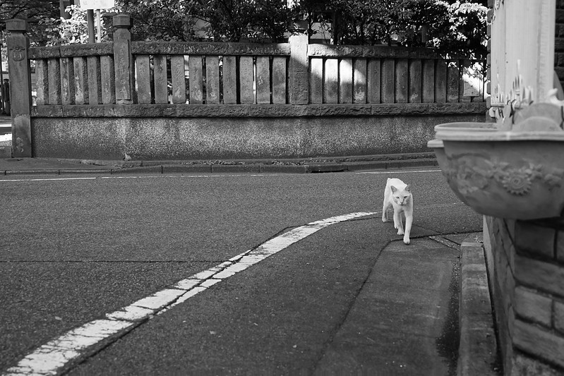 106Sony α7Ⅱ+TAMRON 28 200mm f2 8 5 6 RDX雑司ヶ谷三丁目大鳥神社脇路地の猫 シャム柄