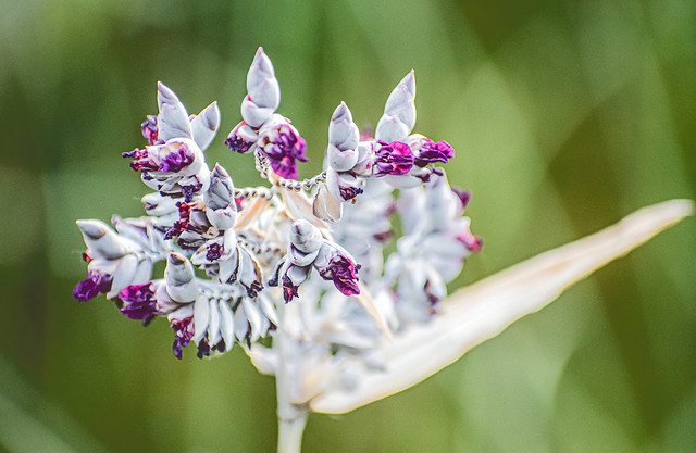 Twisted Flower Wraps