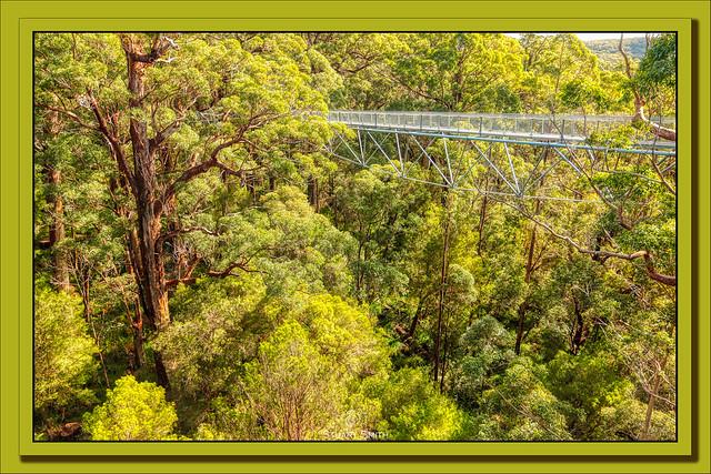 Tree Top Walk, Valley of the Giants, Tingledale, Walpole, Western Australia