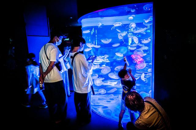 海響館-夜の水族館 2021 #3ーKaikyokan-An aquarium at night 2021 #3