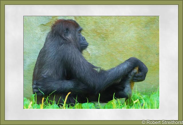 Nude Gorilla