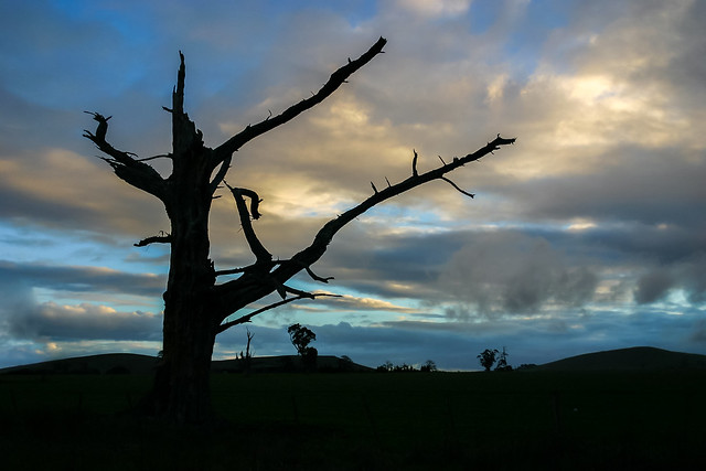 Silhouetted tree skeleton against a dramatic sky