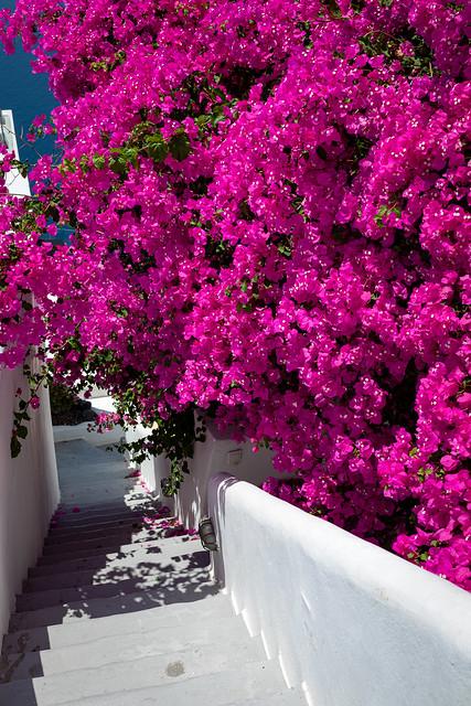 Blumen_am_Haus_4