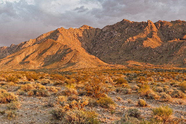 Mojave Trails National Mounment, Border of the Old Woman Mountains Wilderness, View
