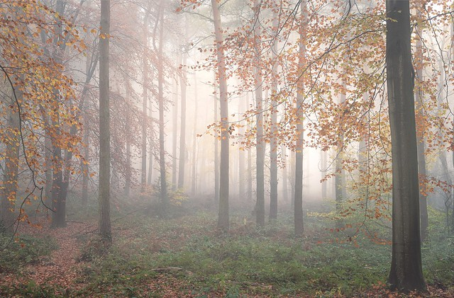 The Ethereal Woods