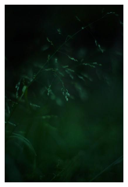 2021/4/24 No. 22/24 -  SONY ILCE‑7M2 / Lomography New Jupiter 3+ 1.5/50 L39/