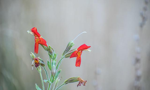 Dangling Orange Flowers