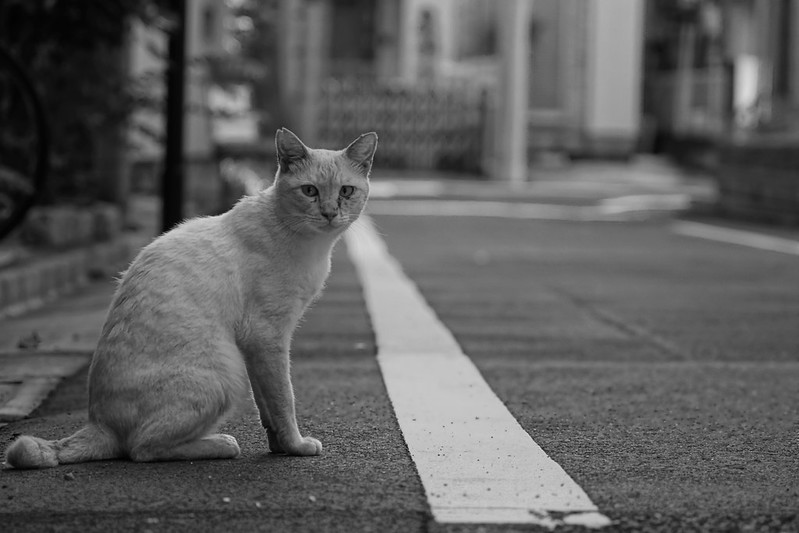 107Sony α7Ⅱ+TAMRON 28 200mm f2 8 5 6 RDX雑司ヶ谷三丁目大鳥神社脇路地の猫 シャム柄
