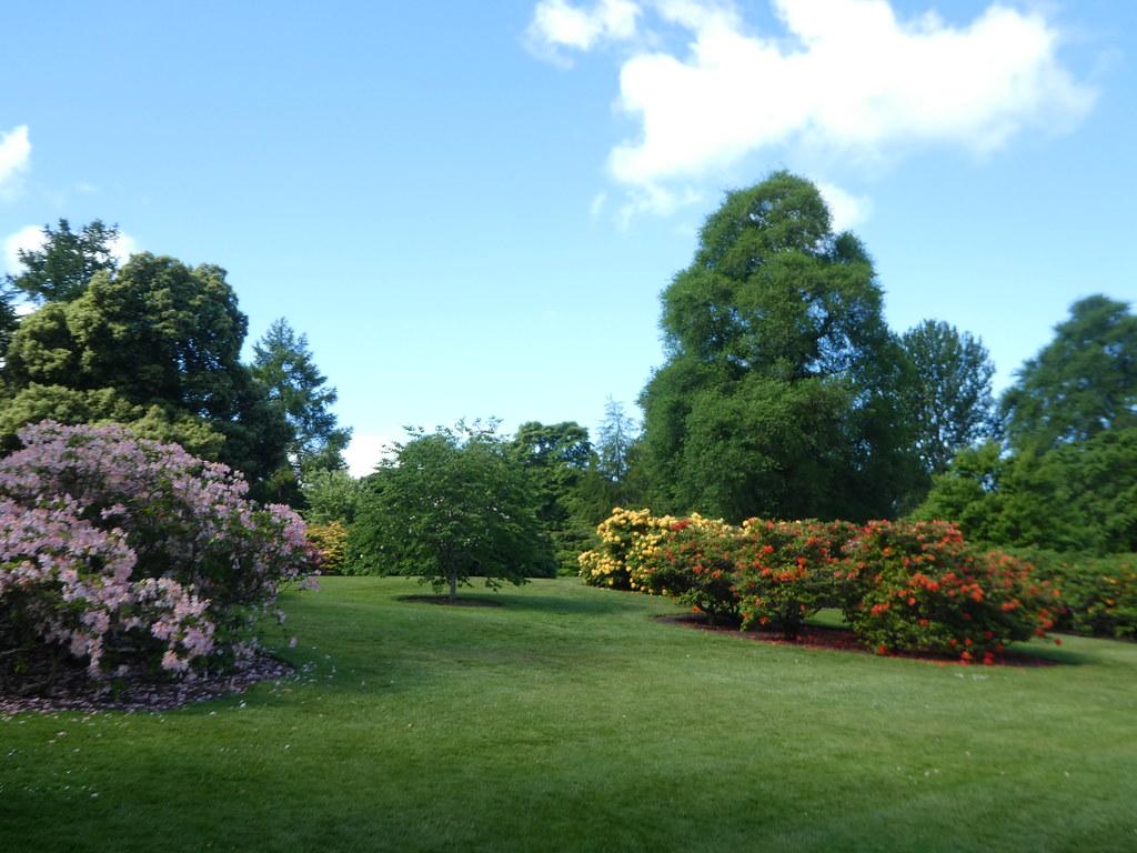 Azaleas in Edinburgh Botanic Garden