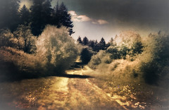 An afternoon in infrared
