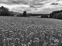 Around Tannu00f6d, Bayerischer Wald