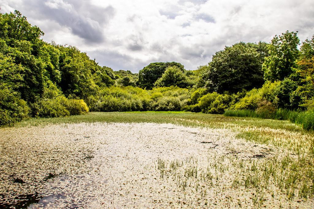 2021 - 07 - 29 - EOS 600D - Meadow Mill Pond - Greenfield - Flintshire - 000